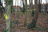 Gele vlekken op bomen in het bosje aan de Neushoornstraat. Foto Rieks Holtkamp